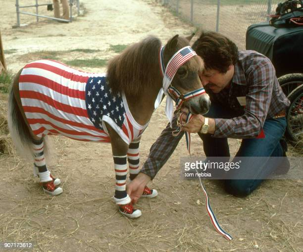 An unidentified man decorates a miniature horse with a variety of red white and blue and Americanflag themed clothing including a pair of sneakers...