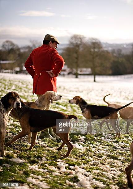 An unidentified man walks among dogs during a hunting party for the traditional Boxing Day hunt near Barlow in Derbyshire north England on December...