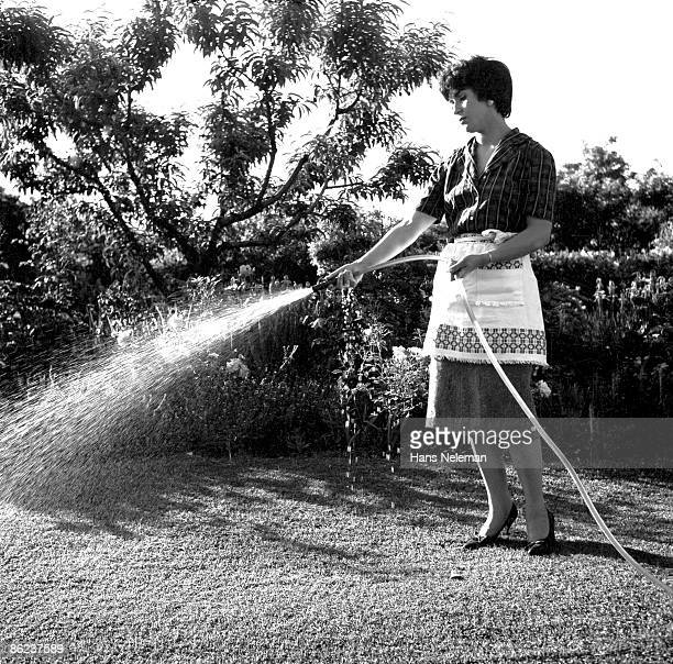 An unidentified woman in a dress, apron, and high-heeled shoes waters the grass with a hose, Santiago, Santiago Region, Chile, December 1960.