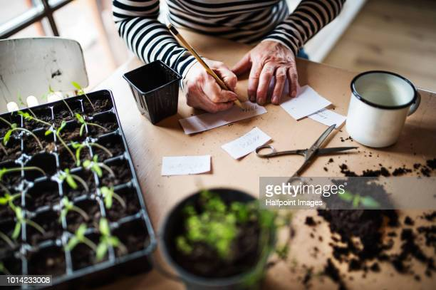 An unrecognizable woman writing labels for plant seedlings.