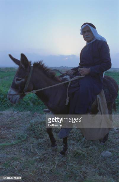 An unspecified Middle Eastern man, wearing a white keffiyeh with a black bad, riding a donkey in an unspecified area of the West Bank, 1988.