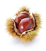 An up close picture of a chestnut