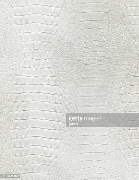 An up close picture of white crocodile leather
