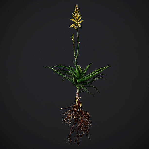 An Uprooted Flowering Aloe Wall Art