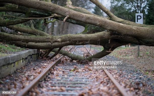An uprooted tree lays on the rails in Muenster northwestern Germany on January 18 as many parts of the country are hit by cyclone 'Friederike' / AFP...