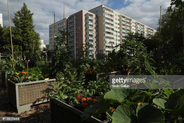 An urban, community garden sponsored by Swedish energy company Vattenfall stands in Mitte district on the grounds of a Vattenfall power plant in the...