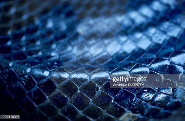 Anaconda skin Amazone Bolivia