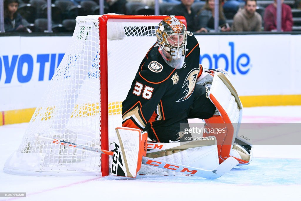 NHL: SEP 24 Preseason - Coyotes at Ducks : News Photo