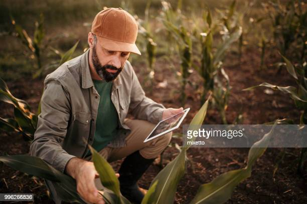 analyzing plants - agronomist stock pictures, royalty-free photos & images