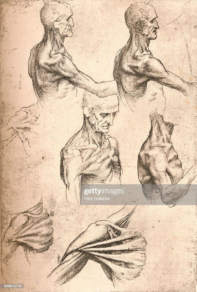 Anatomical drawing, c1472-c1519 (1883). Artist: Leonardo da Vinci ...