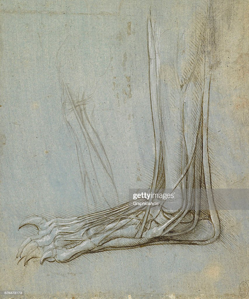 Attractive Leonardo Anatomy Drawings Composition Physiology Of