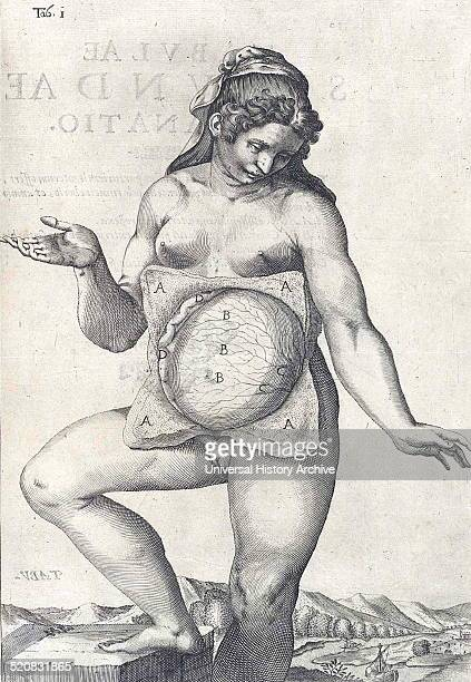 Anatomical drawing of a female body by Adriaan van den Spiegel Spiegel was a Flemish anatomist who was born in Brussels and practiced medicine in...
