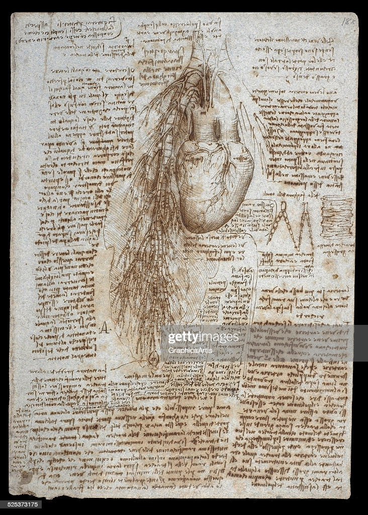 Anatomical Drawing Of The Heart And Bronchial Vessels By Leonardo Da