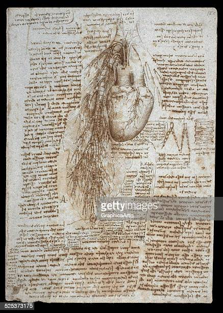 Anatomical drawing of the heart and bronchial vessels by Leonardo da Vinci sketch drawn in ink circa 151113 From the Royal Collection London