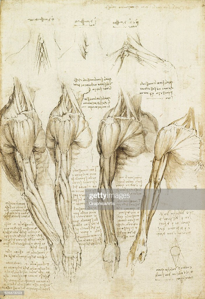 Study Of Muscles By Leonardo Pictures | Getty Images
