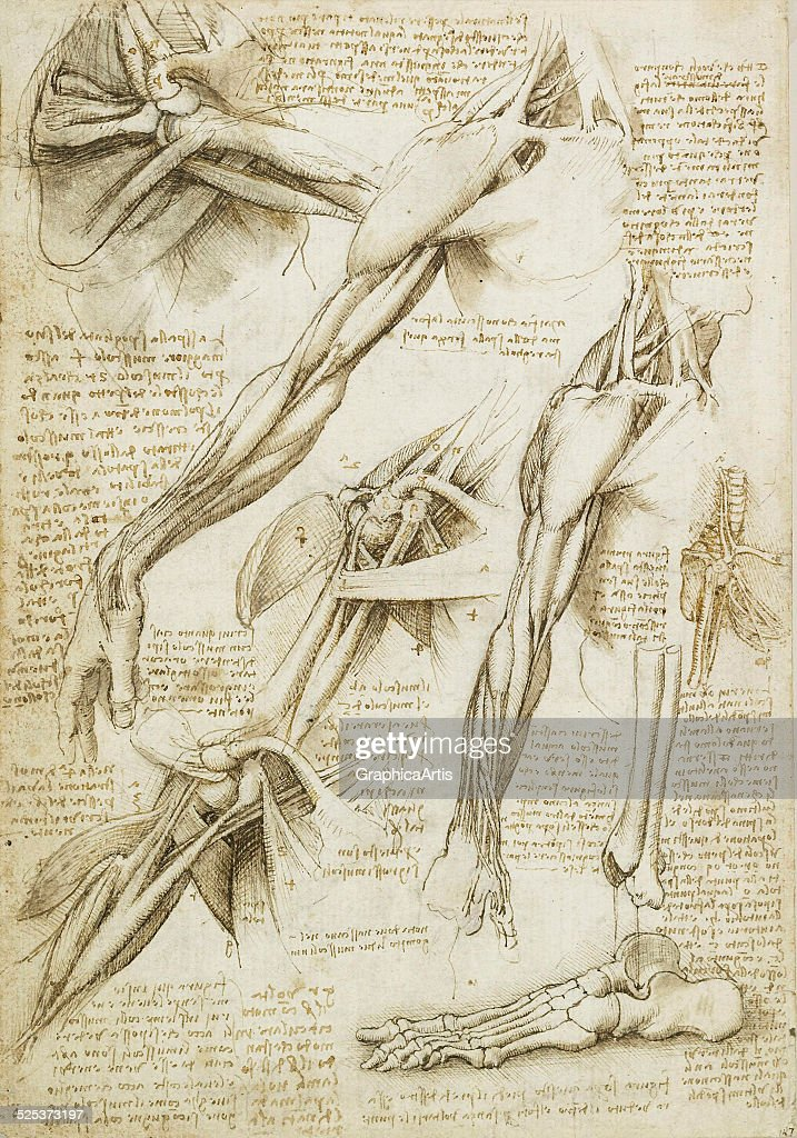 Study Of Muscles By Leonardo Pictures Getty Images