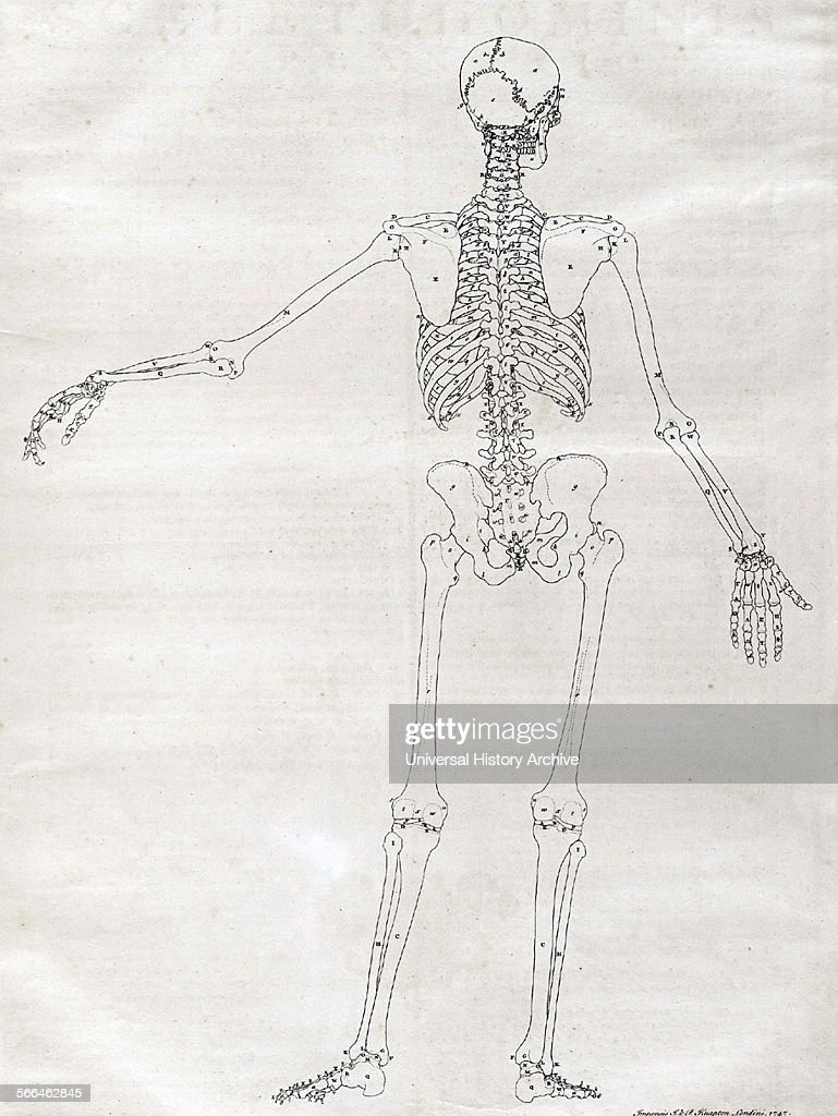 Anatomical illustration. Pictures | Getty Images