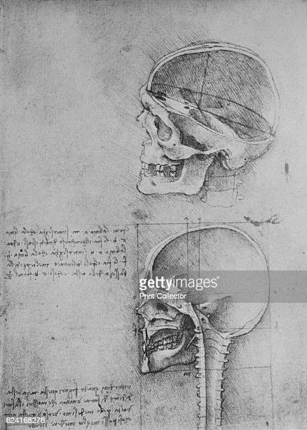 Anatomical Drawings of Two Skulls in Profile to the Left' c1480 From The Drawings of Leonardo da Vinci [Reynal Hitchcock New York 1945] Artist...