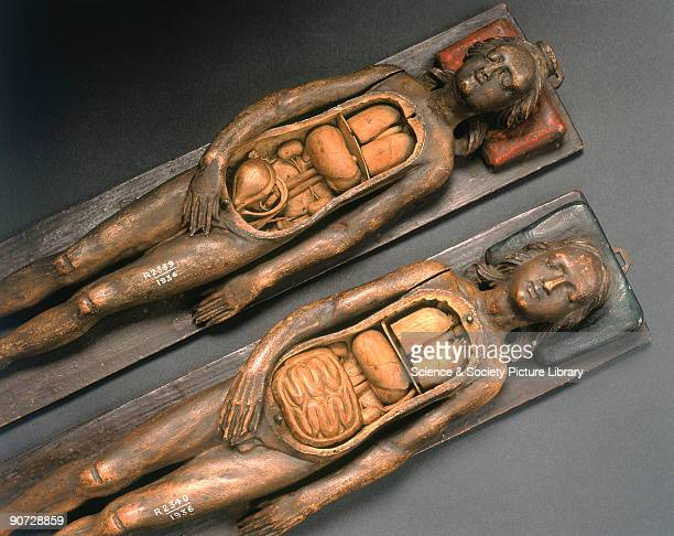 Anatomical figures of a male and a female with removable chest and abdomen covers Some religious restrictions on dissection were lifted in the 15th...