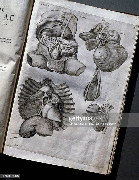 Anatomical illustrations taken from De foetu format by Girolamo Fabrici d'Acquapendente edition published in 1620 in Venice Italy Pavia Biblioteca...