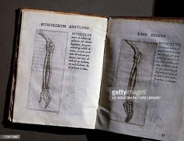 Anatomical illustrations taken from Musculorum Humani Corporis Picturata Dissectio by Giovanni Battista Canano Pavia Biblioteca Universitaria Di Pavia