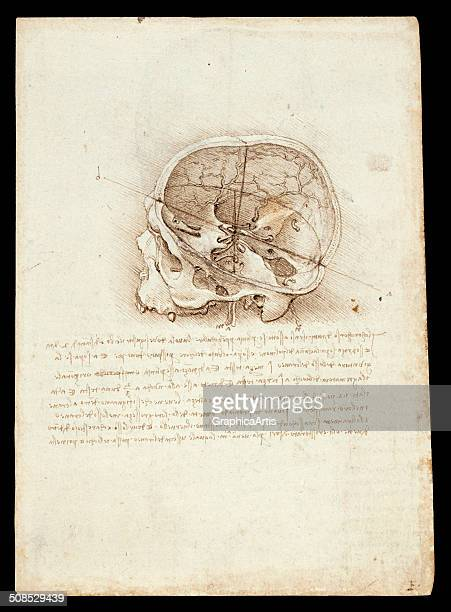 Anatomical ink drawing of a human skull a side view of the cranium by Leonardo da Vinci 1489 From the Royal Collection London