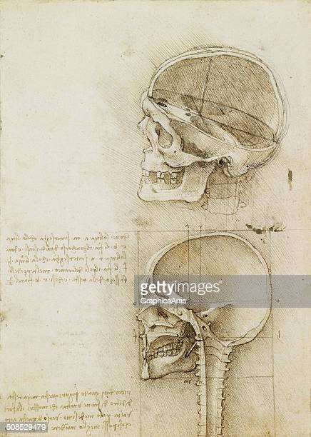 Anatomical ink drawing of two human skulls in section view by Leonardo da Vinci 1489 From the Royal Collection London