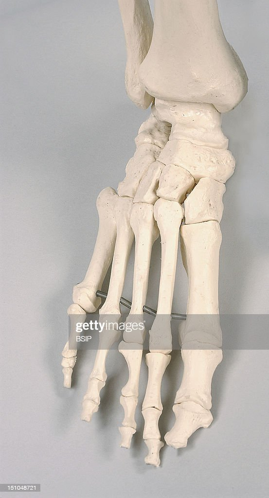 Skeleton Foot Pictures Getty Images