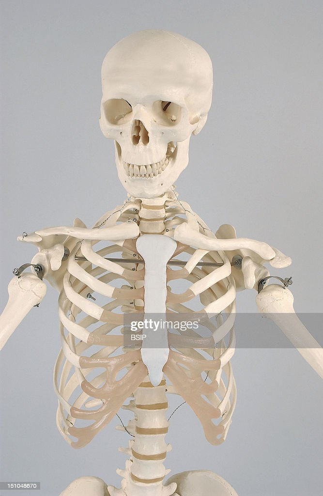 Skeleton Pictures Getty Images