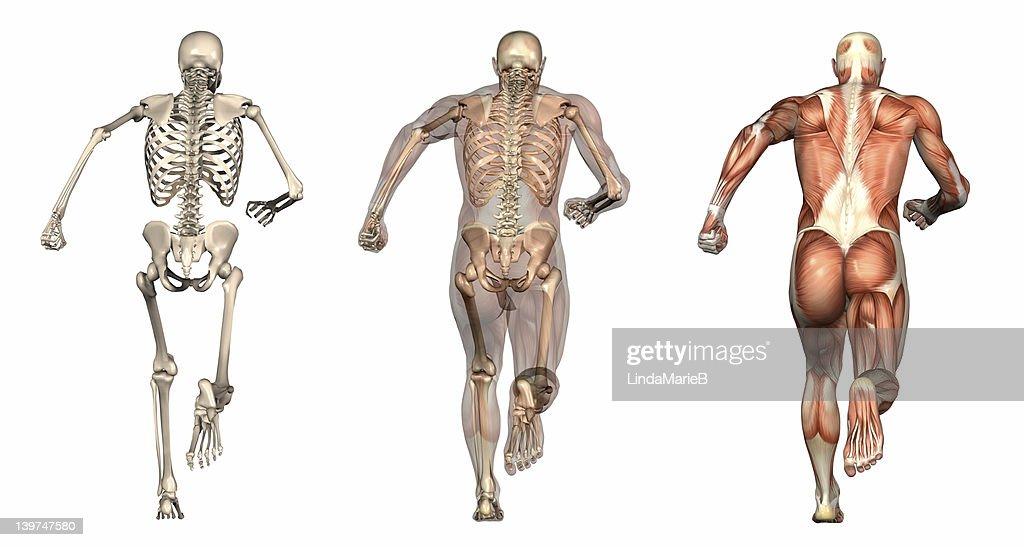 Niedlich Nasm Anatomie Mann Fotos - Anatomie Von Menschlichen ...