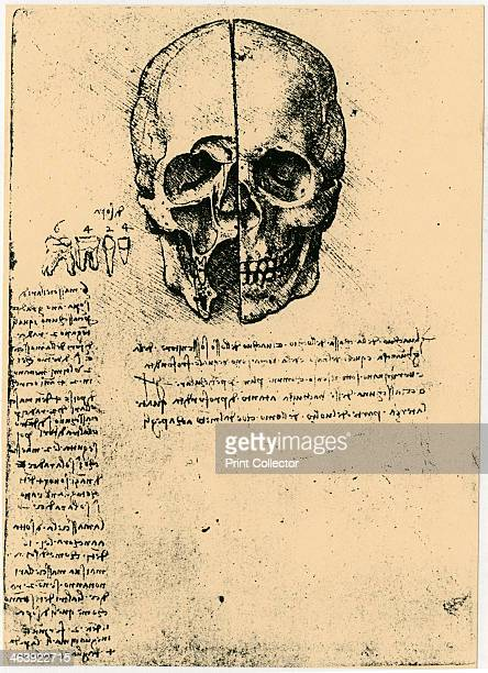 Anatomical sketch of a human skull c14721519