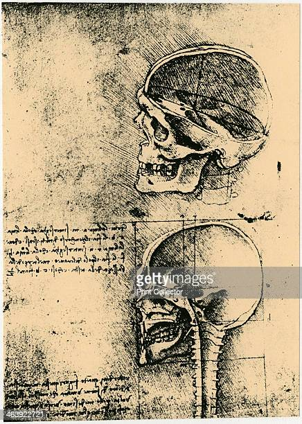 Anatomical sketch two studies of a human skull c1489