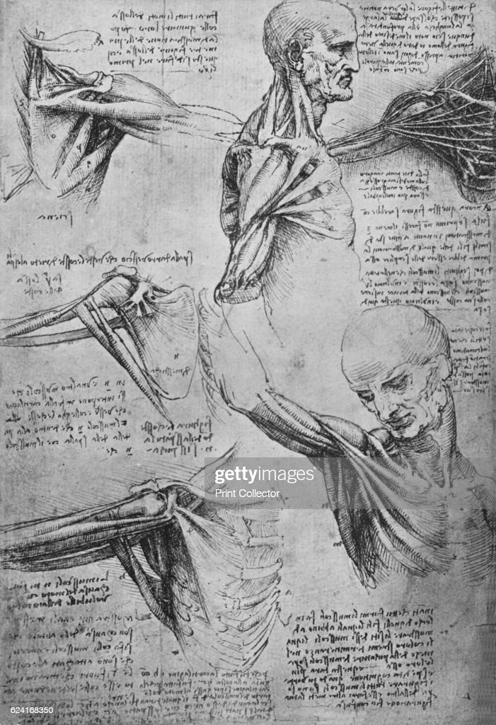 Anatomical Studies of a Man\'s Neck and Shoulders\', c1480 Pictures ...
