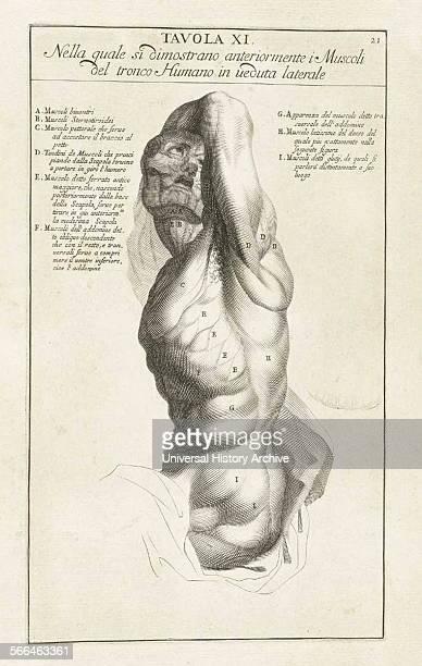Anatomical study by Bernardino Genga 'Anatomia per uso et intelligenza del disegno ricercata non solo su gl'ossi e muscoli del corpo humano'...