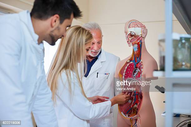 anatomy class - anatomy stock pictures, royalty-free photos & images