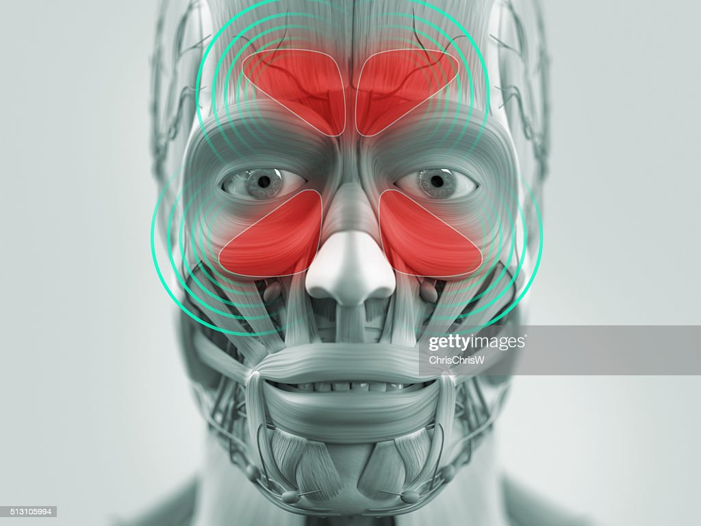 Anatomy Model Showing Sinus Infection Stock Photo | Getty Images