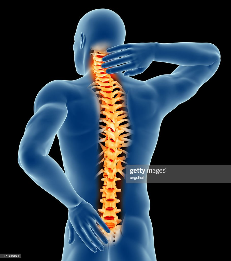 Human Spine Stock Photos And Pictures Getty Images