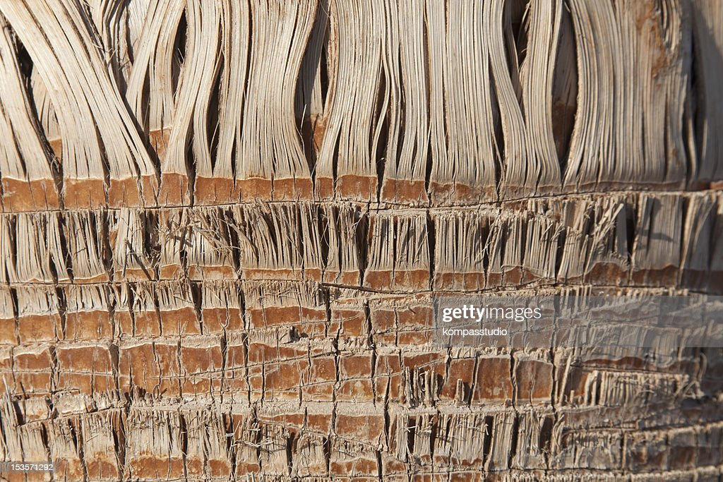 Anatomy Of Palm Tree Stock Photo | Getty Images