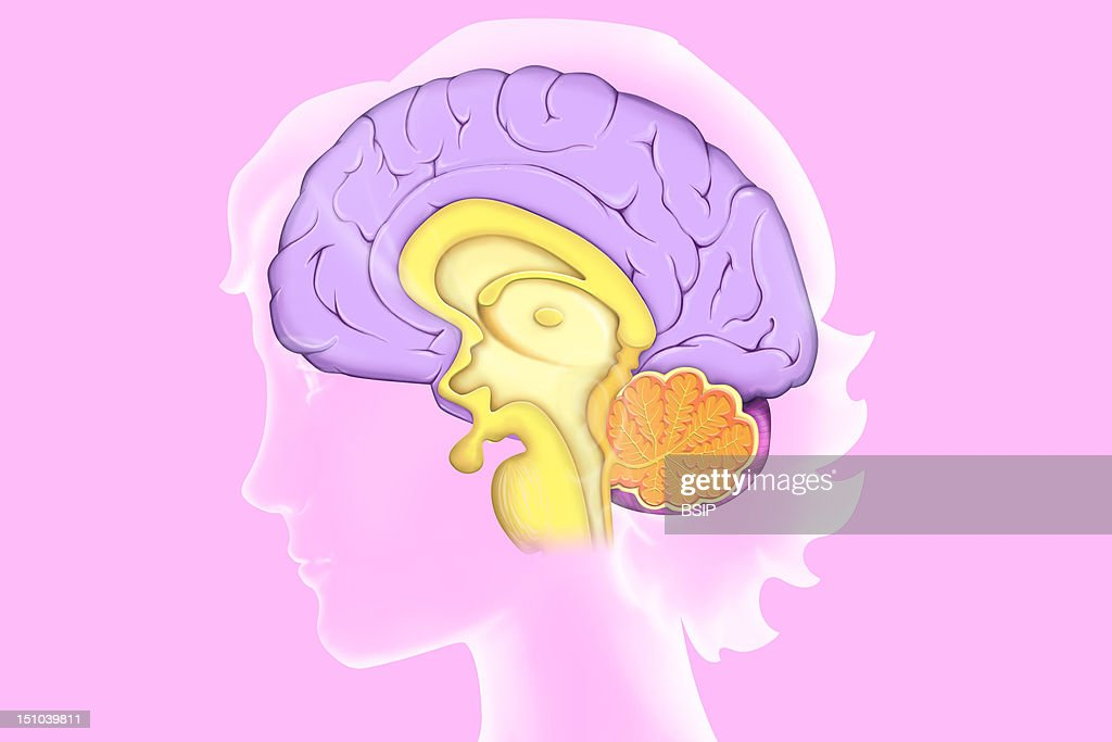 Brain, Drawing Pictures   Getty Images