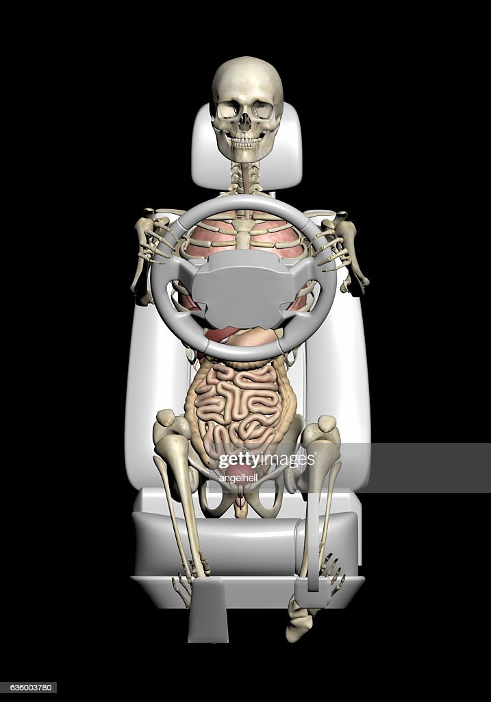 Anatomy Of The Human Body At The Wheel Driving Stock Photo | Getty ...