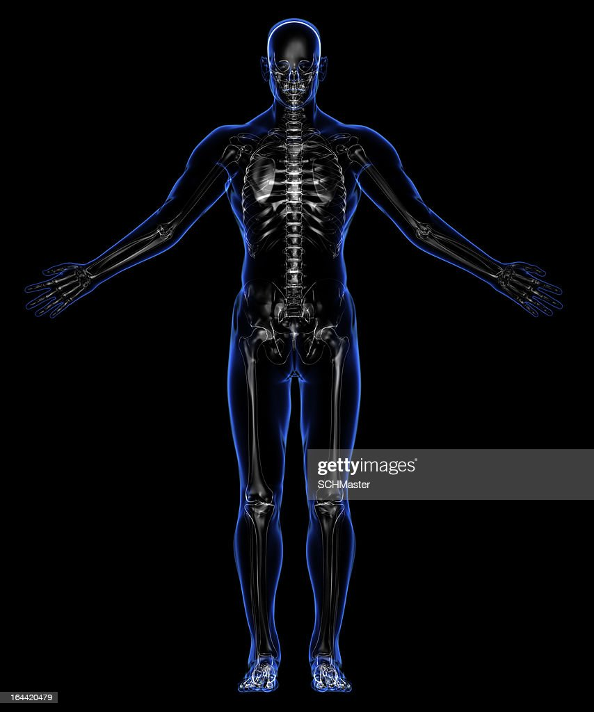 Anatomy Of The Human Body Skin And Skeleton Stock Photo Getty Images