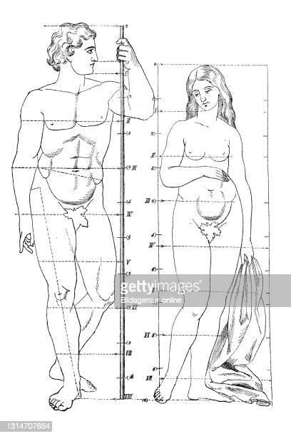 Anatomie körper frau Menschlicher Körper