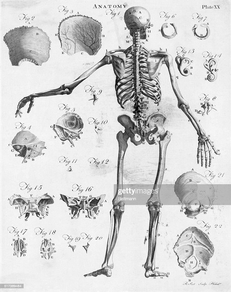 The Human Skeleton Frame From The Back View Illustrations Of