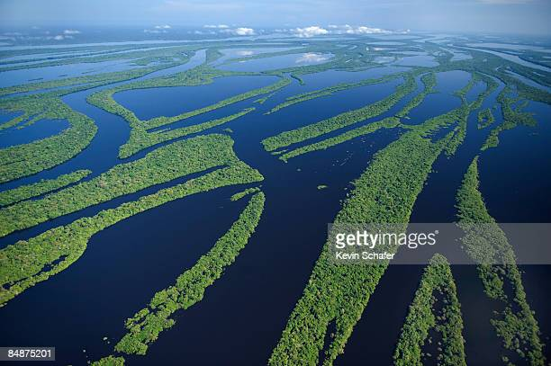 anavilhanas archipelago, brazil - río amazonas fotografías e imágenes de stock
