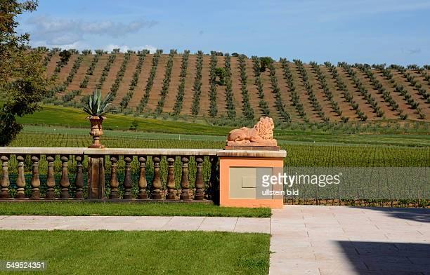 Anbau von Wein und Oliven Aufgang Domäne Maremma Toskana Italien