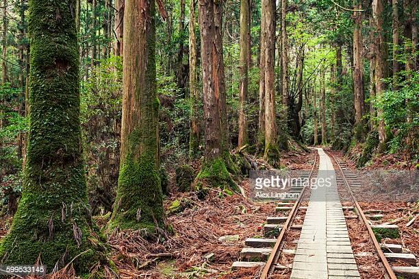 Anbo hiking trail, Yakushima, Japan