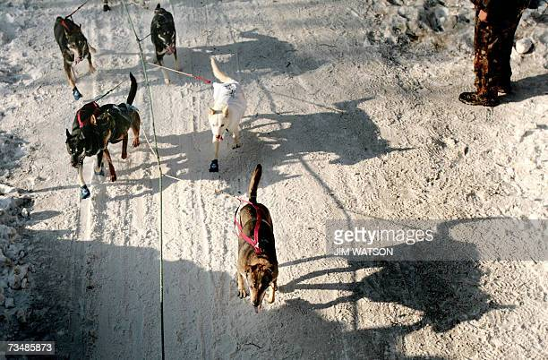 A sled dog team heads down the trail outside of Anchorage Alaska towards their first checkpoint in Eagle River 03 March 2007 at the beginning of...
