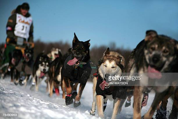 Fouritime Iditarod Champion and 2006 winner Jeff King mushes his sled dog team over frozen Willow Lake as Iditarod XXXV official begins 04 March 2007...