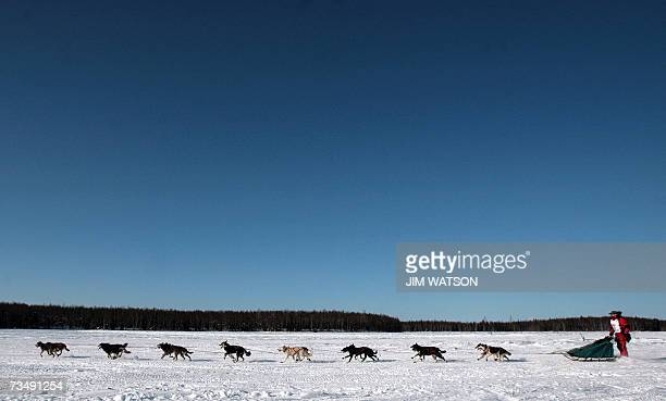 Three time Yukon Quest winner and cancer survivor Lance Mackey mushes his team over frozen Willow Lake as Iditarod XXXV official begins 04 March 2007...