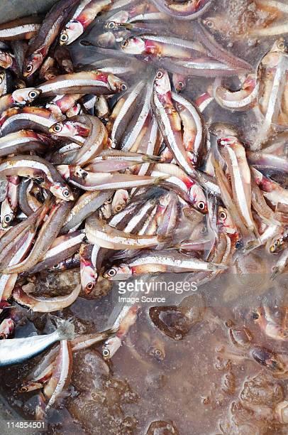 Anchovies for sale at morning fish market, Bay of Bengal,Tamil Nadu